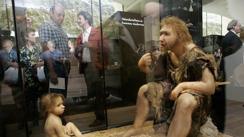 El hombre prehistórico comía tortugas además de carne de caza (estudio)  (PATRICK BERNARD/AFP/Getty Images)