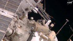 Líquenes de Guadalajara se pasean por la Estación Espacial Internacional