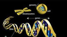 Nuestro ADN contiene un mensaje divino