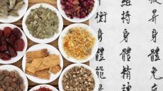 La academia británica analiza el uso de medicina china en lugar de antibióticos