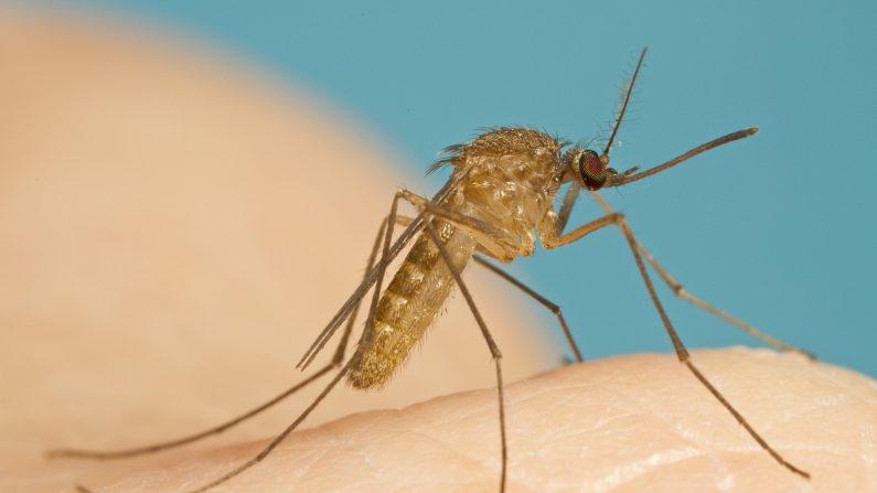 Alternativa natural al repelente de mosquitos ya conocido (Stephen Doggett)
