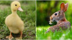 ¿Pato o conejo? La ilusión óptica que podría explicar cómo trabaja tu mente