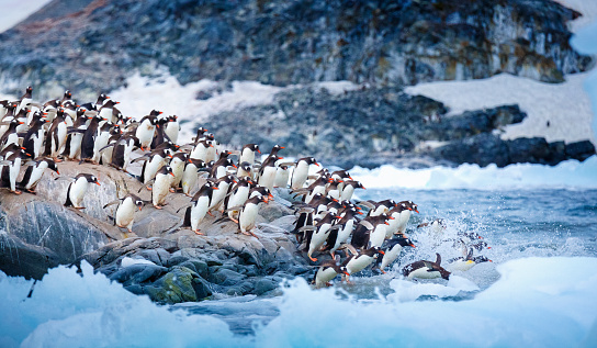 (Foto: David Merron Photograph/Getty Images)