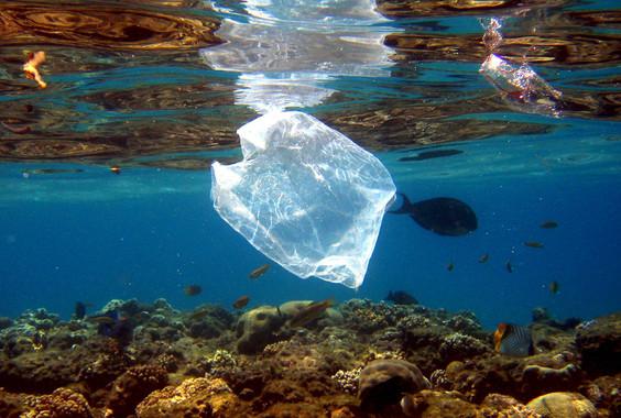 Peces y bolsas de plástico comparten espacio en el arrecife de coral que rodea el complejo turístico 'Naama Bay', en el mar Rojo, Egipto / EFE