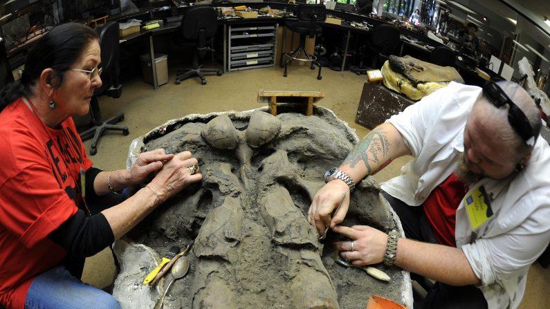Arqueólogos encuentran la calavera de un mamut en Oklahoma. (Foto:  GABRIEL BOUYS/AFP/Getty Images)
