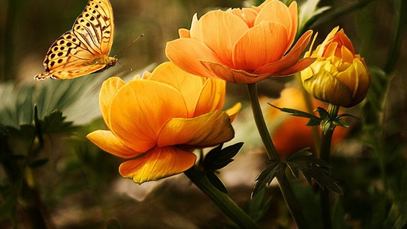 En primavera, abra su mente a nuevas ideas y experiencias, salga y muévase, busque nuevas soluciones a viejos problemas. (Larisa Koshkina/Pixabay)
