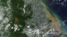El secreto mejor guardado del Amazonas: Un gran arrecife de coral