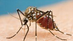En Cuba ascienden a 27 los casos de personas infectadas con Zika