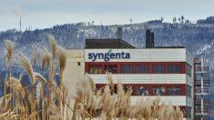 Récord de oposición a patente de Syngenta sobre tomates de Sudamérica