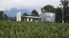 Nopal: fuente revolucionaria de biogás y bioenergía
