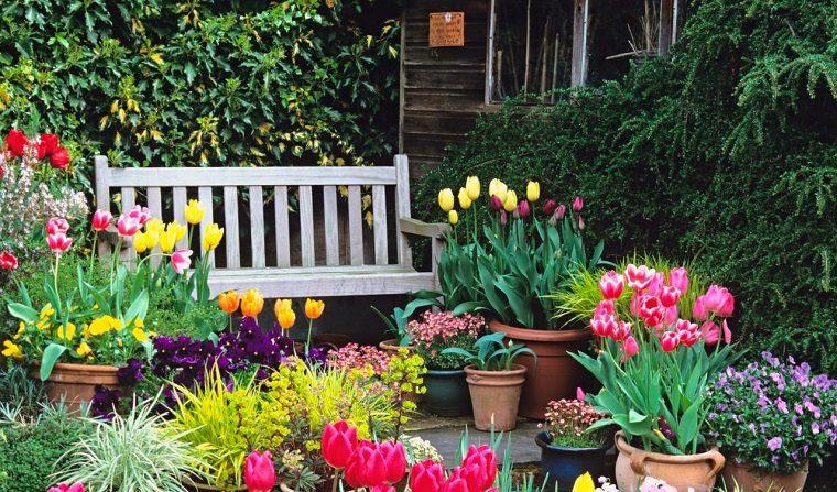 Las 5 mejores plantas para exterior que lucir n hermosas - Plantas de exterior resistentes todo el ano ...
