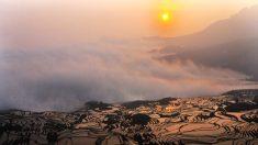 Dichos chinos: La honestidad vale oro, el que no pierde no gana
