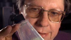 Científicos de la NASA dicen que existe vida alienígena