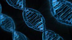 La detección temprana de los patrones genéticos ayudaría a combatir el tumor de mamas