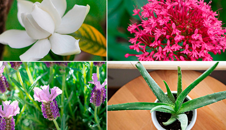 Cuatro plantas ideales para favorecer el sue o y tener el - Plantas para dormitorio ...