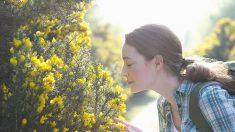 Flores de Bach: Cómo pueden ayudar las esencias florales a combatir las enfermedades