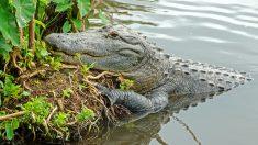 Padres del Lane Graves no demandarán a Disney por la muerte del menor a causa de un caimán