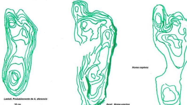Comparación de las huellas de: Izquierda: Australopithecus afarensis (3,6 Ma) Centro: Homo erectus (1,5 Ma) Derecha: Homo sapiens (actual). (Gustavocarras/Wikimedia Commons)