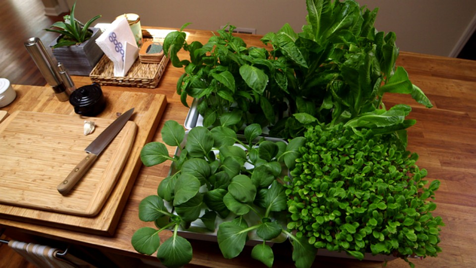Nanofarm el proyecto perfecto para cultivar vegetales en for Cultivar vegetales en casa