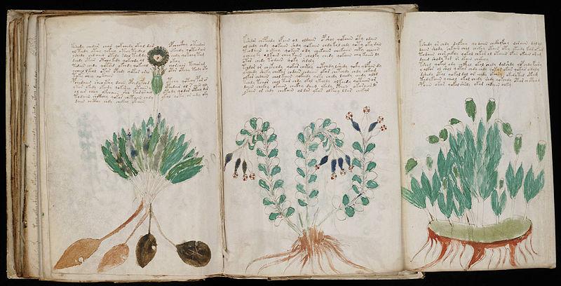 Muestra plantas medicinales. Extracto del Manuscrito de Voynich