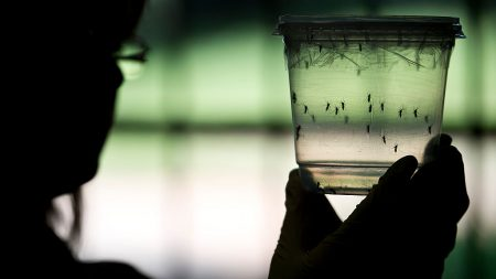 Alentador éxito de tres vacunas del Zika en monos