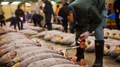 Piden a embarazadas y niños no comer albacora y otros peces por altas concentraciones de mercurio