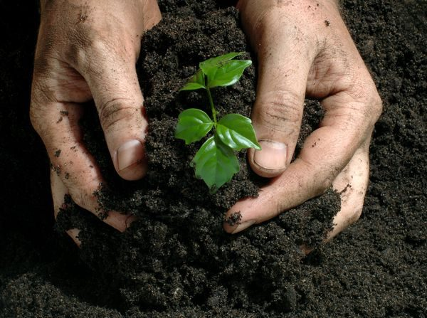 Tierra como abono ecológico fermentada compuesta con materia orgánica. (Getty Images/Creative)