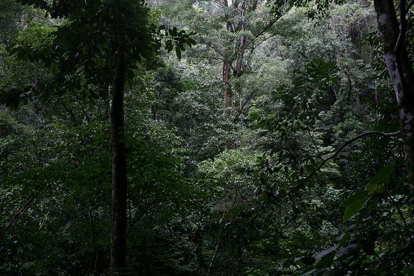 Analizan el cambio de uso del suelo de Costa Rica para luchar contra la deforestación. (foto Andrew Lichtenstein/Getty Images)