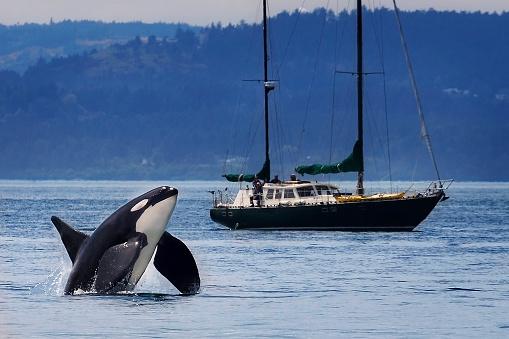 Los grandes animales marinos están en peligro (foto Chase Dekker Wild-Life/Getty Images)