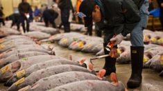 Piden a embarazadas y niños no comer albacora, atún o tiburón por altas concentraciones de mercurio