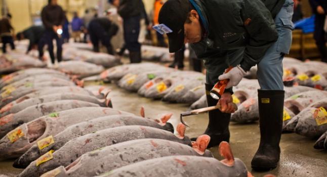 Chile: examinan la calidad del atún pescado en el Pacífico, febrero de 2012. (Daniel Berehulak /Getty Images)