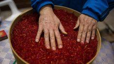 Azafrán: propiedades, beneficios y contraindicaciones de una planta poderosa