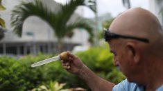 Hallan más mosquitos con zika en Miami Beach