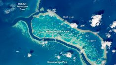 Descubren gigantesco arrecife en la Gran Barrera de Coral