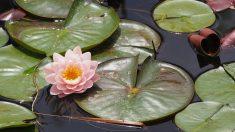 ¿Eres puro como el loto, tienes la fuerza del ciruelo y el espíritu del jade?