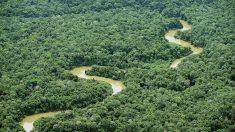 Las claves del Fondo Amazónico que Bolsonaro quiere renegociar con Alemania y Noruega