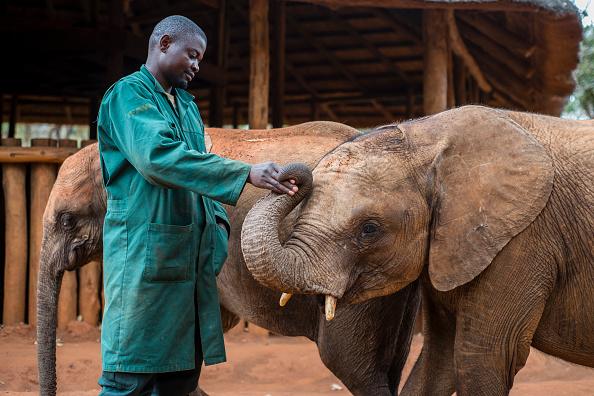 Fracasa iniciativa para prohibir el comercio de elefantes africanos (foto Oleksandr Rupeta/Getty Images)