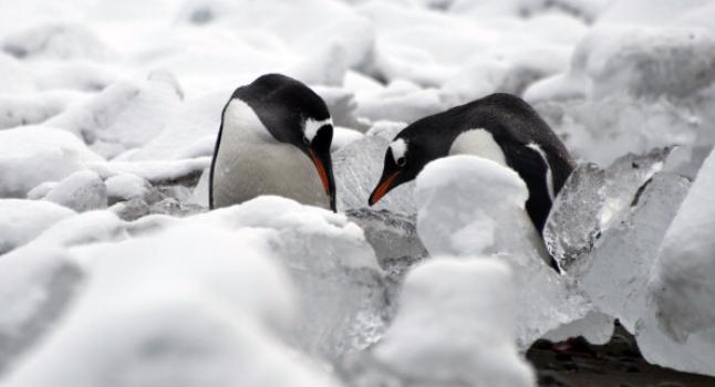 Deshielo en la Antártida causó la subida del mar en 16 metros hace miles de años. (VANDERLEI ALMEIDA/AFP/Getty Images)