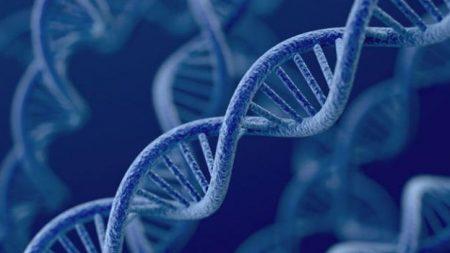 Descubren 17 casos raros en que el ADN no se transmite a los hijos tal como se conoce