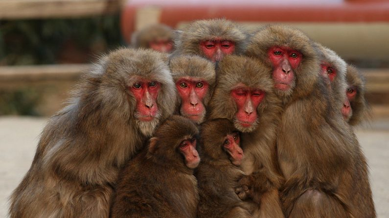 (foto Buddhika Weerasinghe/Getty Images)