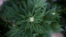 Arrestan mujer que vendía productos de vapeo con marihuana que causaron enfermos graves en 2017