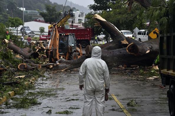 Tormenta Otto en Panamá volteó árboles y provocó deslizamientos de tierra. Foto:  RODRIGO ARANGUA/AFP/Getty Images)