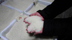 2,5 toneladas de 'arroz' plástico chino incautado en Nigeria