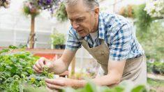 Cómo hacer un invernadero en tu hogar paso a paso