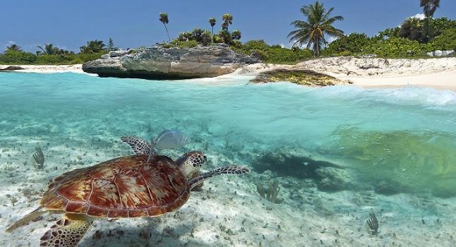 Tortuga marina. (Wikimedia)