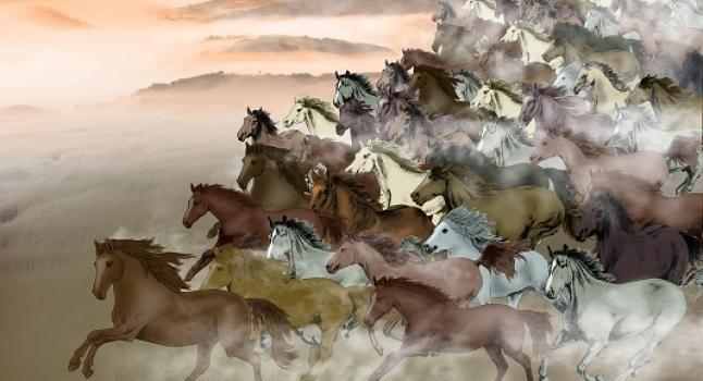 Miles de caballos galopando. (Anny Jean/La Gran Época)