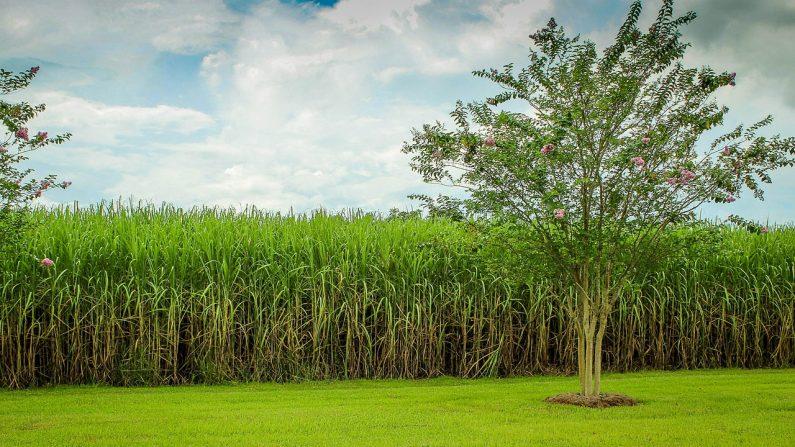 Cómo aprovechar las tierras salinas para producir biomasa sostenible (Foto Pixabay)