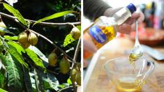 La deliciosa nuez moscada se bebe, se come y ayuda a curar un buen número de enfermedades