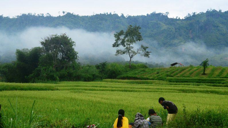 La agricultura ecológica a pequeña escala, única forma de erradicar el hambre en el mundo según la ONU (Foto Pixabay)