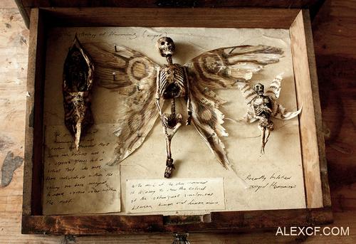 El peculiar museo que expone especies negadas por la ciencia